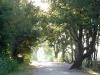 Chemin le long du Verdon
